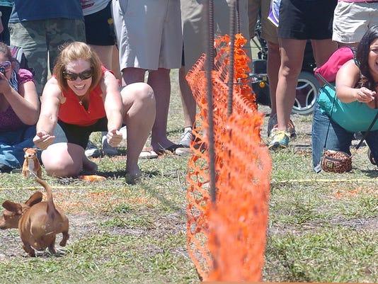weiner-dog-race2.JPG
