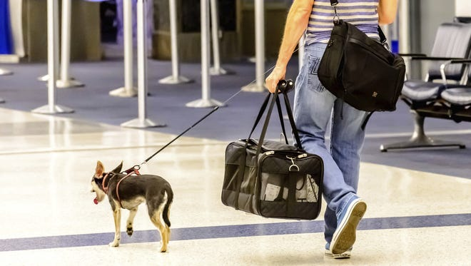 More than two million pets and animals are flown by the nation's airlines each year.