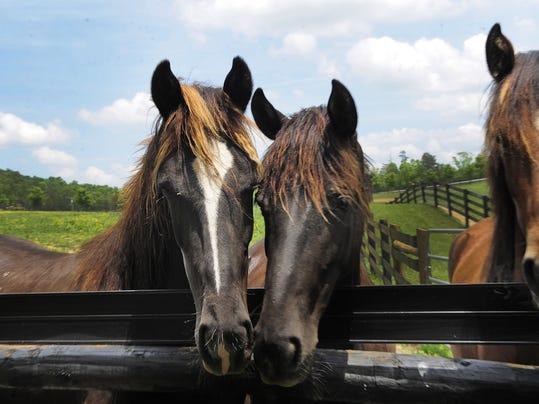 Horse soring.jpg