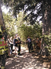 Crews look up at a bear that had climbed a tree near Campus West in Fort Collins.