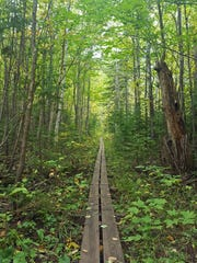 A boardwalk leads through a muddy forest along the Lake Superior Trail in the Porcupine Mountains Wilderness State Park.