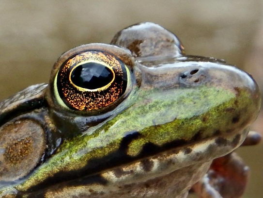 Photo of a frog by Austin Holschbach.