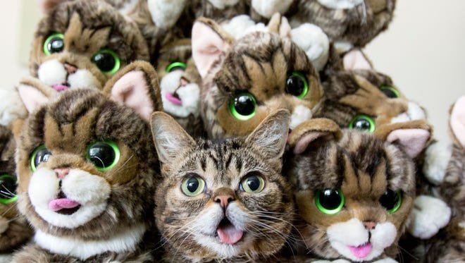 Lil BUB is surrounded by stuffed likenesses, available in her online store.