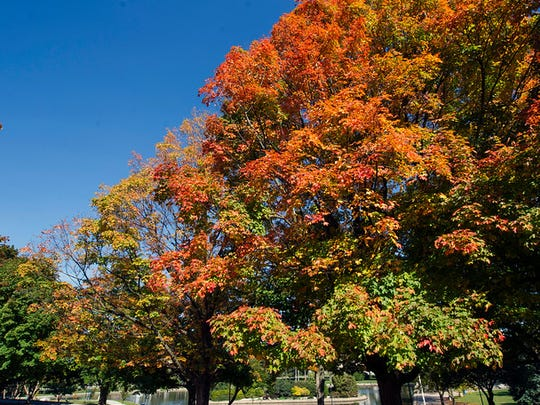 The maples surrounding Kiwanis Lake in York are starting to fill with color Sunday. Paul Kuehnel - Daily Record/Sunday News