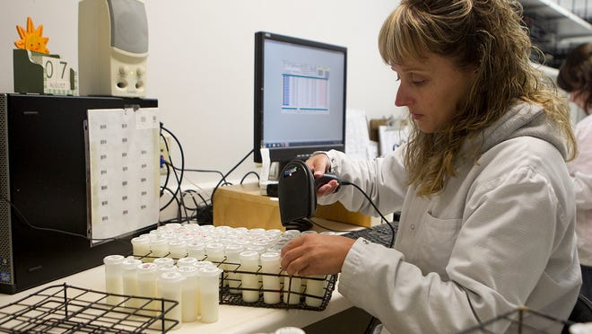 Milk lab technician Tracy Weber scans in milk samples Wednesday at AgSource Laboratories in Marshfield.