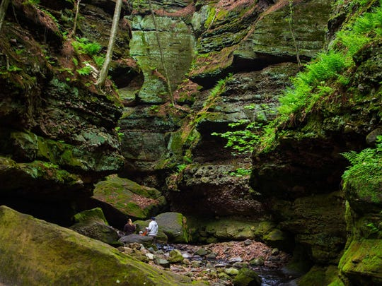 Moss, trees and other vegetation cling to the sandstone-and- quartz ite cliffs in the gorge at Parfrey's Glen near Baraboo.