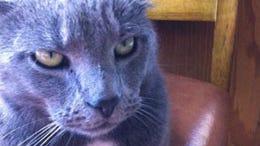 lost-graycat0325