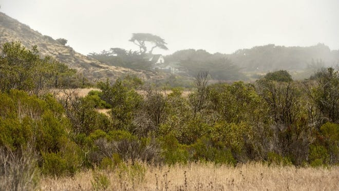 Trees and shrubs are seen at the shore level of Santa Rosa Island in Channel Islands National Park.