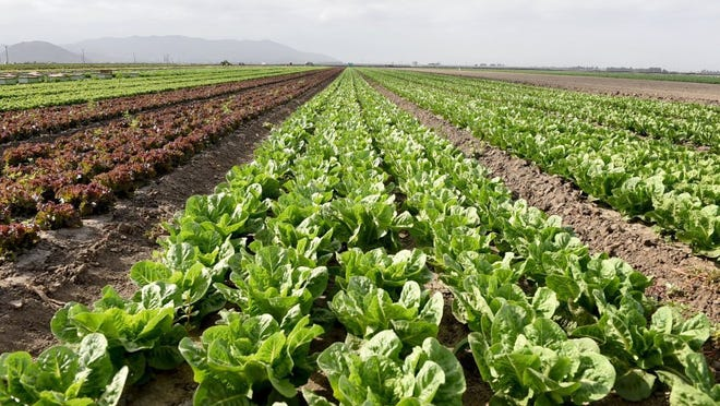 STAR FILE PHOTO An event organized Wednesday evening by two supervisors drew advocates and others to discuss problems faced by workers in Ventura County's agriculture industry.