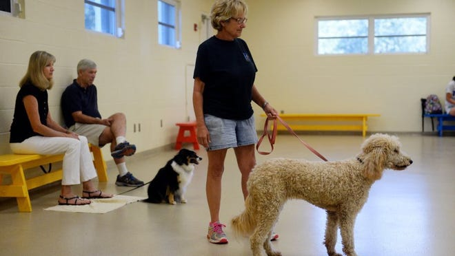 Cecelia Sumner, trainer and animal behavior manager for the Humane Society of Vero Beach and Indian River County, waits with Gracie, a 1-year-old Goldendoodle, as owner Lauri Tagliaferro (not pictured) moves across the room Monday during a training session. Participants in the session played a board game called 'My Dog Can Do That' to work on basic commands. 'I'm always looking for fun ways to get people to come to class,' said Sumner. 'My personal theory is that dogs who come to training class with their people tend to stay in their homes because there's a relationship and a commitment.' Sumner holds classes every week throughout the year at the Humane Society.