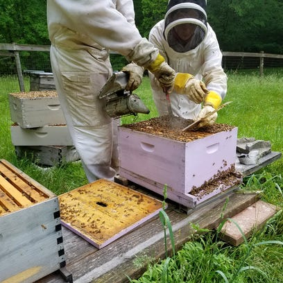 3 IU grads run business with a buzz to save the bees