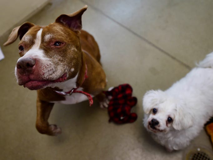 Hazel and Koda, the York Daily Record's Pets of the