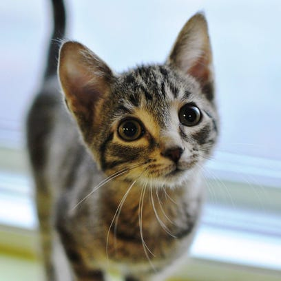 Spanky the kitten was likely stolen Tuesday, according