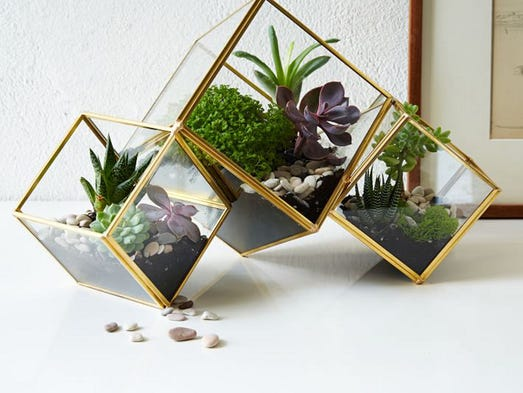 Terrarium forms have evolved beyond glass bowls. These