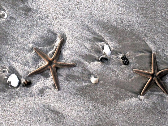 Following the blizzard on Dec. 8, and a very high tide, sea stars and lots of shells washed up on Padre Island beaches.