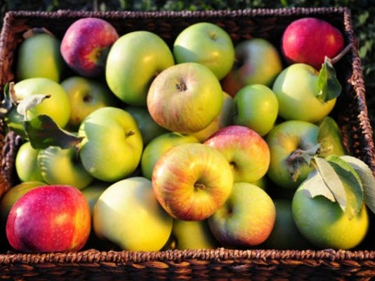 A basket of apples from Brown's Orchards and Farm Market in Springfield Township.
