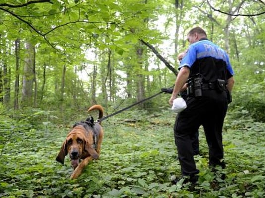 Lou, a bloodhound, follows a scent with Sgt. Samuel Shipley of the York County Sheriff's Department, rear, and Southern Regional Police Officer Daniel Teague in the woods Friday behind Southern Middle School in June. They were participating in a mock abduction, the goal of which was to test the York County Child Abduction Response Effort. (DAILY RECORD/SUNDAY NEWS - KATE PENN)