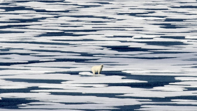 A polar bear stands on the ice in the Franklin Strait in the Canadian Arctic Archipelago. With Siberia seeing its warmest temperature on record this year and enormous chunks of ice caps in Greenland and Canada sliding into the sea, countries are acutely aware there's no vaccine for global warming.