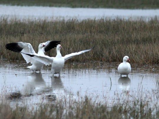 The Coastal Bend Bays & Estuaries Program plans to