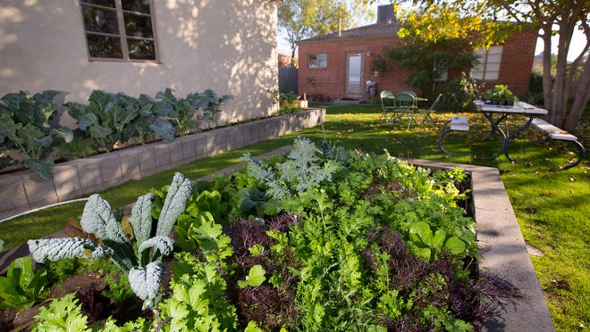 An herb and vegetable bed in the back of chef Aaron Chamberlin's home in Phoenix's historic Coronado neighborhood is an example of urban gardening.