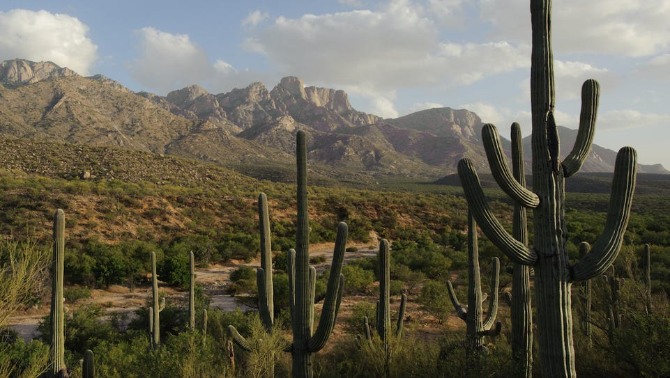 Catalina State Park features a series of desert trails
