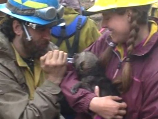 Wolf pups rescued