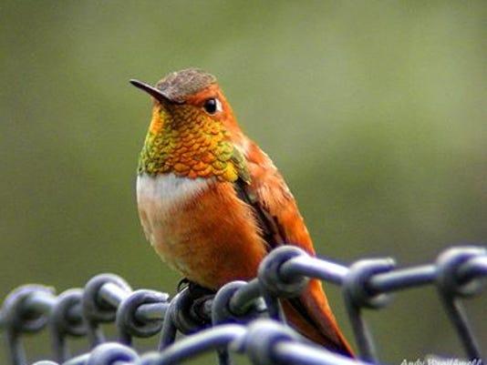 635814679013904920-hummingbird