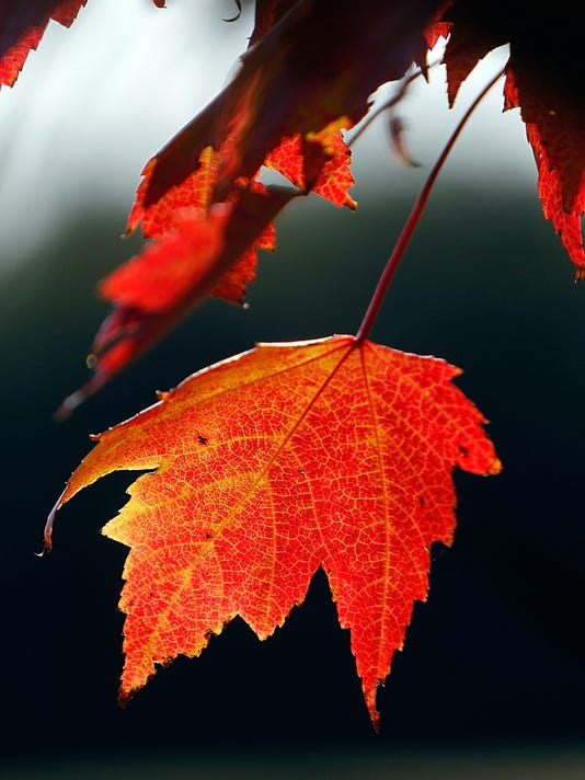 -BGMBrd_09-18-2014_Daily_1_B001~~2014~09~17~IMG_A03_FALL_COLORS_18s._1_1_D28.jpg