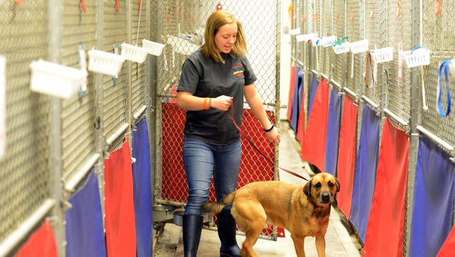 Chloe Soliday, the animal care coordinator for the Fairfield County Dog Shelter and Adoption Center, takes Tyson out of his kennel to go outside Tuesday in Lancaster.