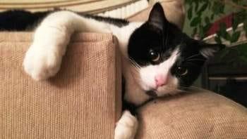 Please get my cat license in June!