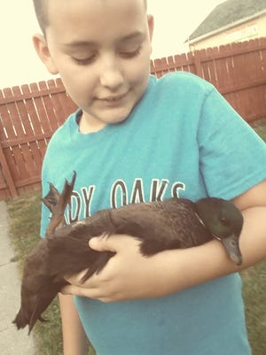 Coby Ortiz, 12, with Little C, one of his eight therapy ducks. Ortiz is autistic and the ducks have had a major impact on his treatment, according to his mother, Tania Ortiz. Richland Borough is seeking an appeal to their zoning hearing board's decision to allow Ortiz to keep the ducks in the municipality's business district.