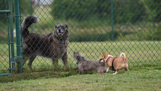 The Sebastian Bark Park dog park at 245 Keen Terrace.