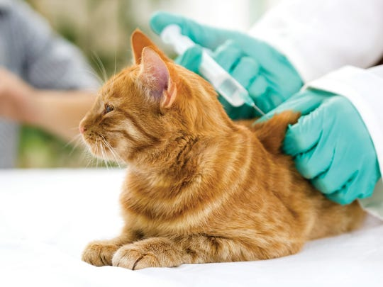 Even indoor cats should receive a rabies vaccination,