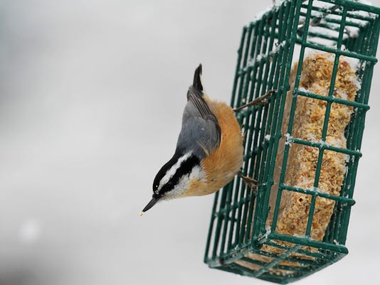A holiday treat that's for the birds