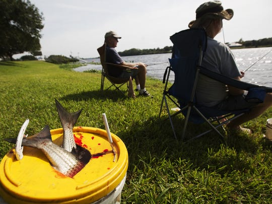 Fishing is a popular pastime at the Franklin Locks campground on the Caloosahatchee River. mullet poke through the top of a bucket while  Mike Ives, right, from lakeland and Dave Jackson from Eagle Lake fish at the Franklin Locks campground on the Caloosahatchee River on Monday 11/16/2015.  Ives says November is the golden month for catching mullet but said this year it has just been OK.
