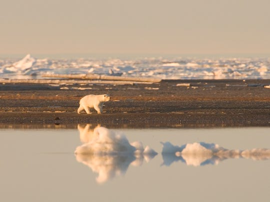 Alaska's 19.6-million-acre Arctic National Wildlife Refuge harbors an amazing range of wildlife and no known introduced species.