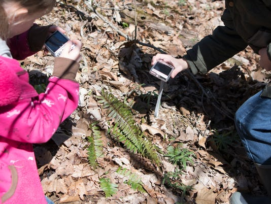 Worthington students take a picture of a fern as part of their nature treasure hunt expedition at the Metahqua Nature Preserve.