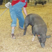 Cowgirl Sass & Savvy: Wandering pigs not welcome