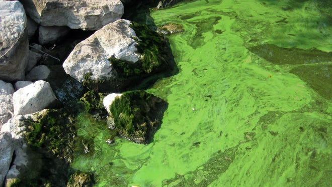 Algae blooms fueled by nutrient-rich runoff have created a dead zone in Green Bay that is threatening wildlife and potentially tourism.