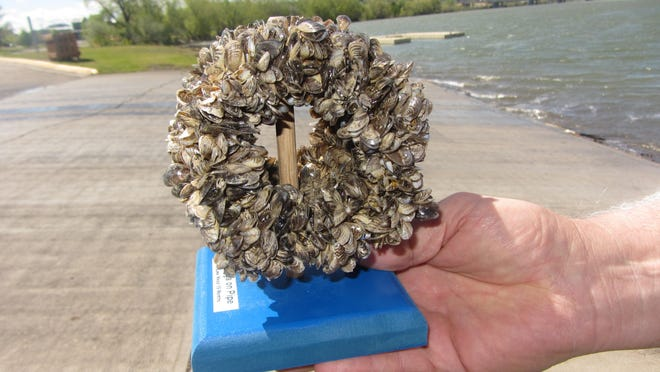 """A pipe clogged with invasive quagga mussels. """"I believe it was a very significant piece of legislation,"""" state rep. Mike Cuffe says of House Bill 586, which beefed up the state's boat inspection program.Tribune photo/Karl Puckett"""