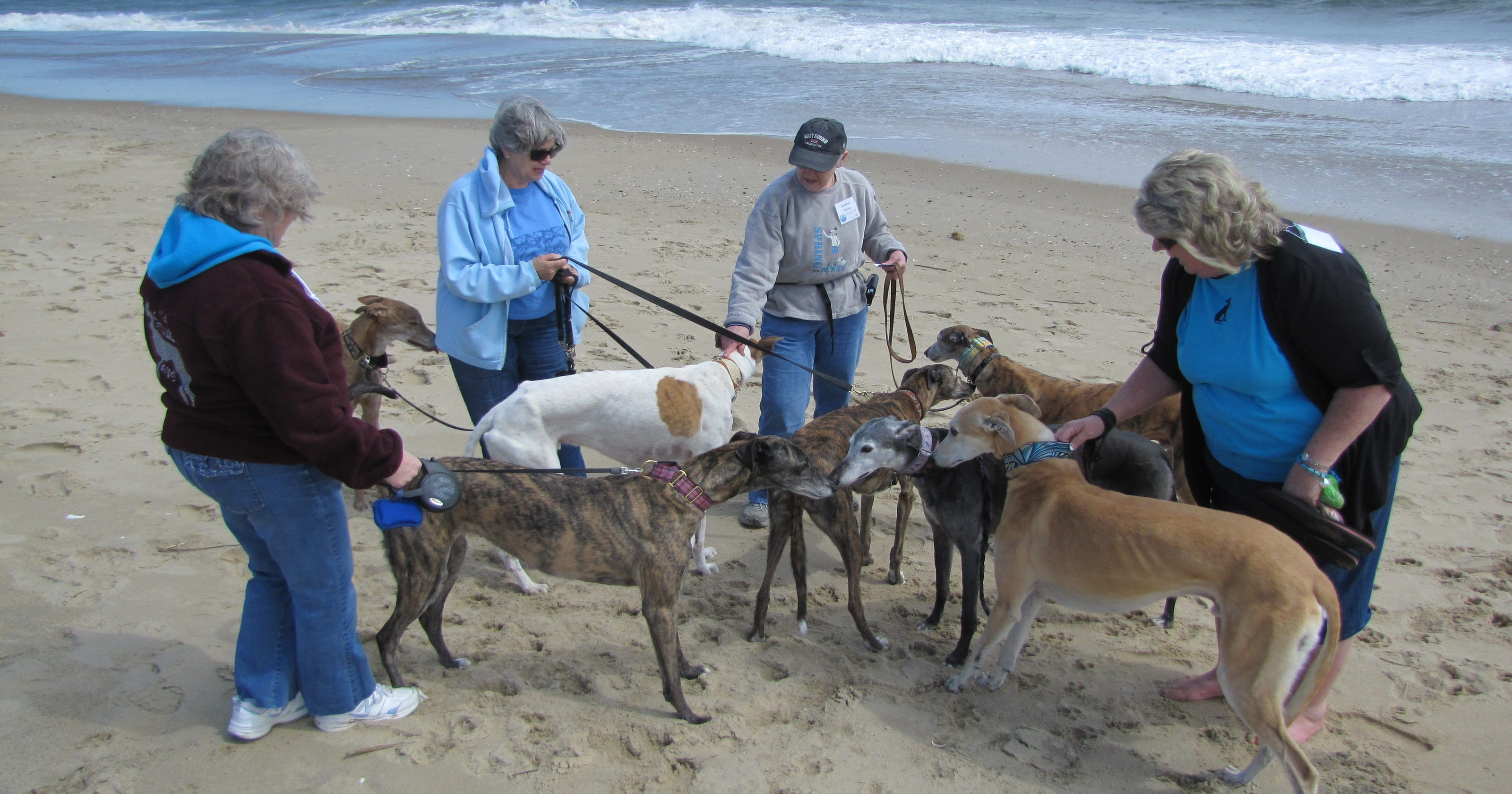 Greyhounds and friends to hit the beach