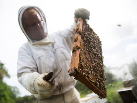 Tom May takes one of the frames out of the hive on Tuesday, June 20, 2017, at the South Naples Citrus Grove. May has hives across Southwest Florida.
