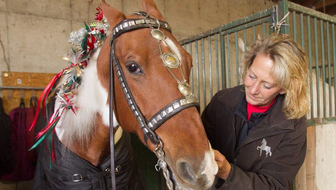 Holly Armstrong adjusts a vintage parade bridle on Paddyngton's Mark of Distinction, more casually known as Marcus, a four-time world championship winning horse who will be among the American Saddlebred horses ridden in the America's Thanksgiving Day Parade in Detroit.