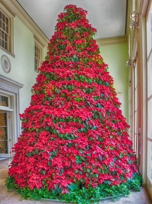 Poinsettias, Christmas trees and other plants related to this time of year can be toxic for children and pets.