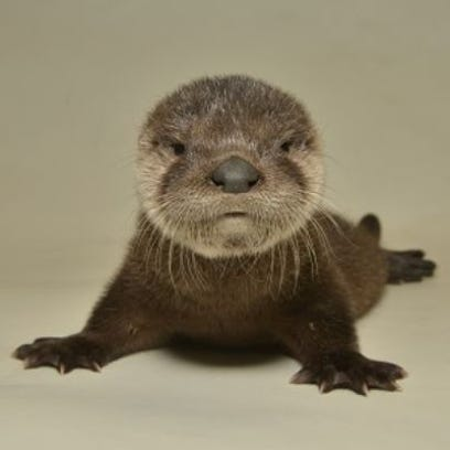 You otter enter this Arizona baby-naming contest