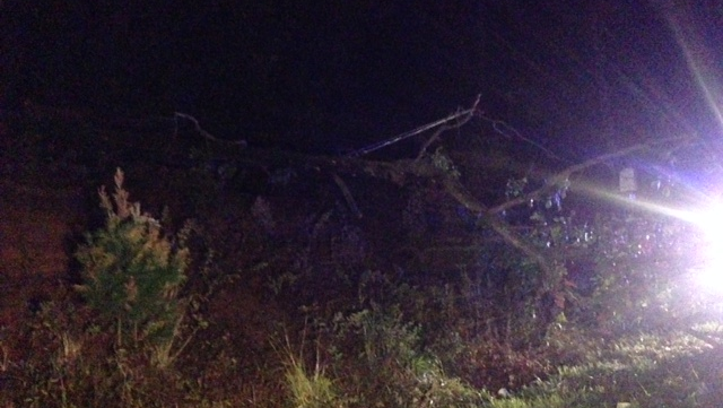 Tree that fell on power lines