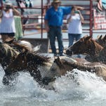 WATCH: Saltwater Cowboys herd ponies in corral after 91st Pony Swim