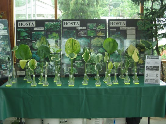 The Tri-State Hosta Society will host a plant sale at the Frelinghuysen Arboretum tomorrow.