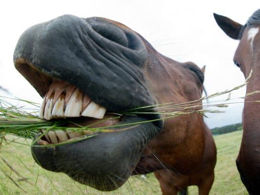 horse slaughterhouse