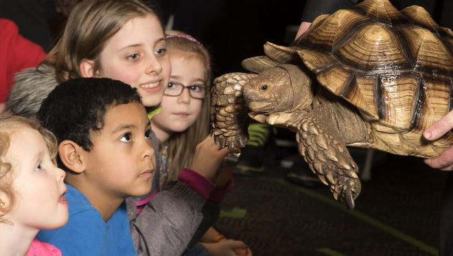 Young RMSC guests meet a tortoise during the museum's February school recess Animal Week event.